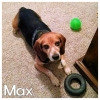 Max *