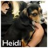 Heidi *