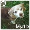 Myrtle *