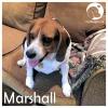 Marshall *