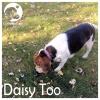 Daisy Too*