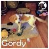 Gordy *