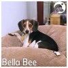 Bella Bee *