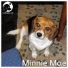 Minnie Mae *