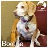 Bootsie *