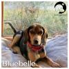 Bluebelle *