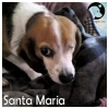 Santa Maria *