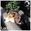 Larz *