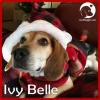 Ivy Belle*