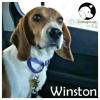 Winston *