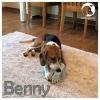 Benny *