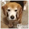 Diesel *