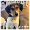 Juliette *