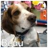 Beau *