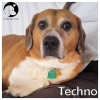 Techno *