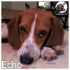 Echo *