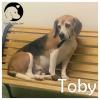Toby *