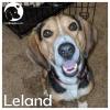 Leland *