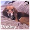 Paisley *
