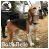 Baby Belle *
