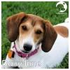 Daisy Jane *