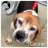 George *