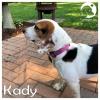 Kady *
