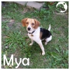 Mya *