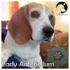 Lady Antebellum*