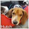 Hutch *