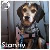 Starsky *