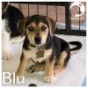 Blu *