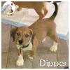 Dipper *
