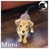 Mimi *