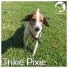 Trixie Pixie*