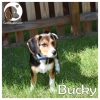 Bucky *