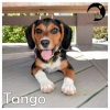 Tango *
