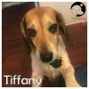 Tiffany *