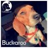 Buckaroo *