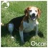 Oscar *