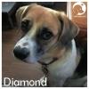 Diamond *