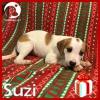 Suzi *