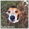 Bucky Barnes *