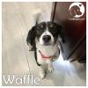 Waffle *