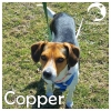 Copper *