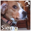Sierra *