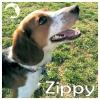 Zippy *