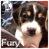 Fury *