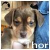 Thor *