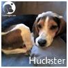 Huckster *